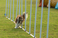 Dog Trials 2017-5
